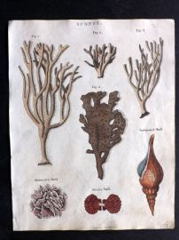 Goldsmith & Shaw 1817 Hand Col Print. Sponges & Shells, Coral